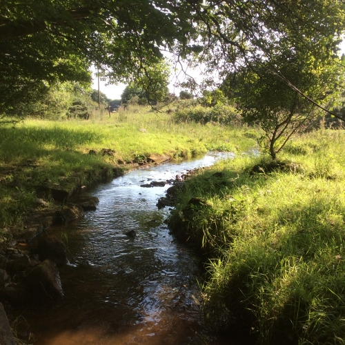 The stream at the edge of the meadow.