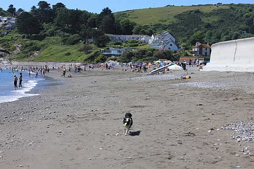 Wait for me! Seaton and Downderry beaches are dog friendly all year.