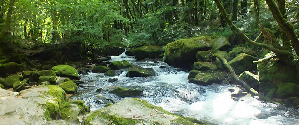 Views of Golitha Falls, a fantastic place for a relaxing stroll through the woods